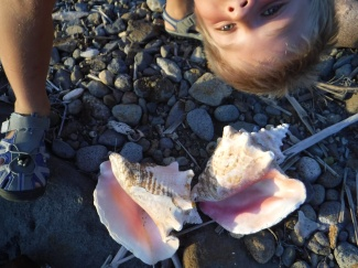 Finding shells