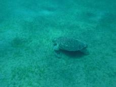 Turtles turtles...