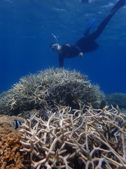 Amazing Staghorn coral