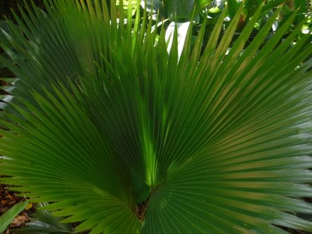 gorgeous palm