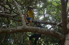 good trees need to be climbed!