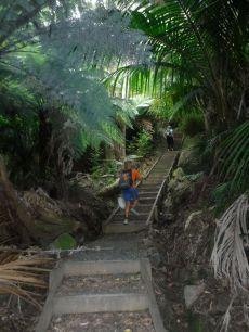 the stairway up to Hirakimata/ Mt Hobson