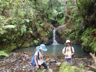 Kauri falls- Whangaparapara